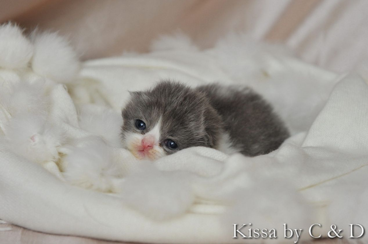 The tiniest kitten. (With images) Newborn kittens, Cute