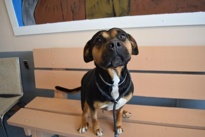 Adopt Nina on Animals, Animal shelter, Save animals