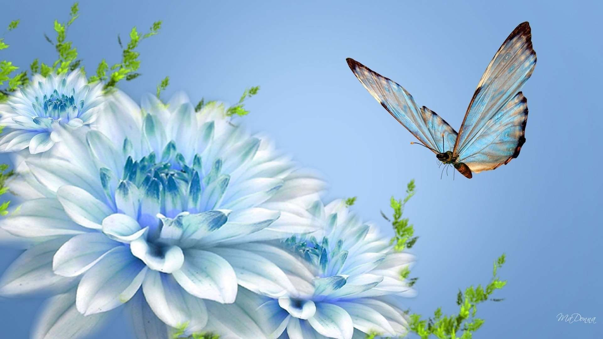 Fresh White Blue Flower Facebook Cover Photos Nature Flowers With