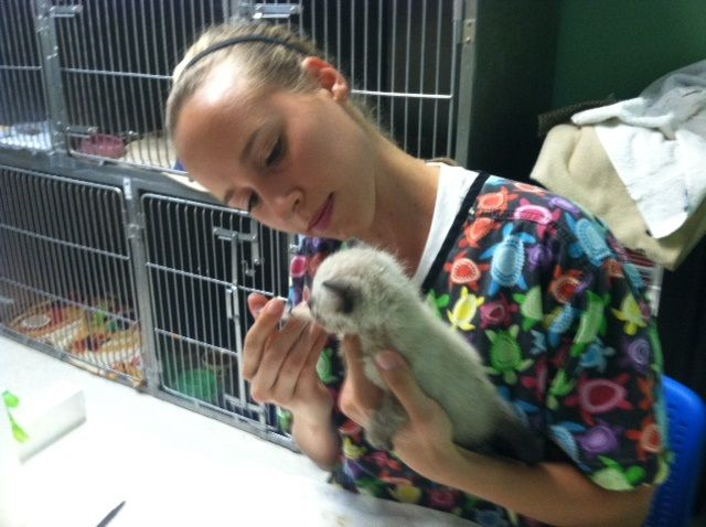 An Apa Volunteer Bottle Feeding A Kitten Cats Lovesavestheday Love Saves The Day Cat S Book Tours