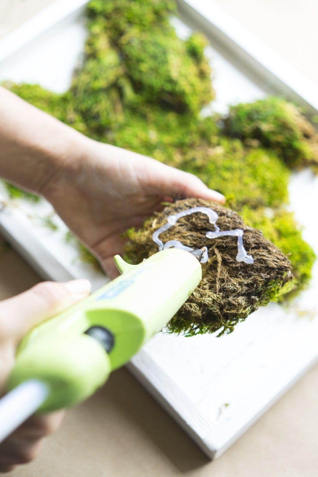 How to make a carefree moss garden vertical garden diy
