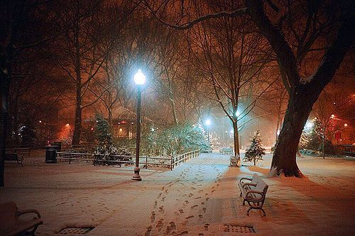 Lights, trees, benches, snow.