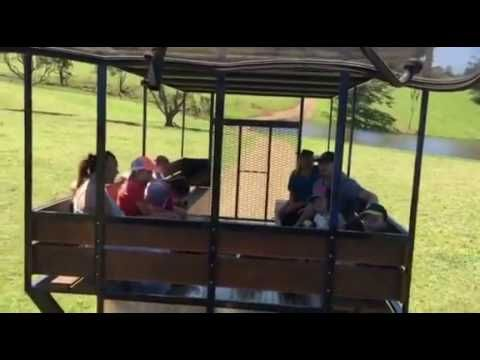 Tractor Rides - Maleny Dairies