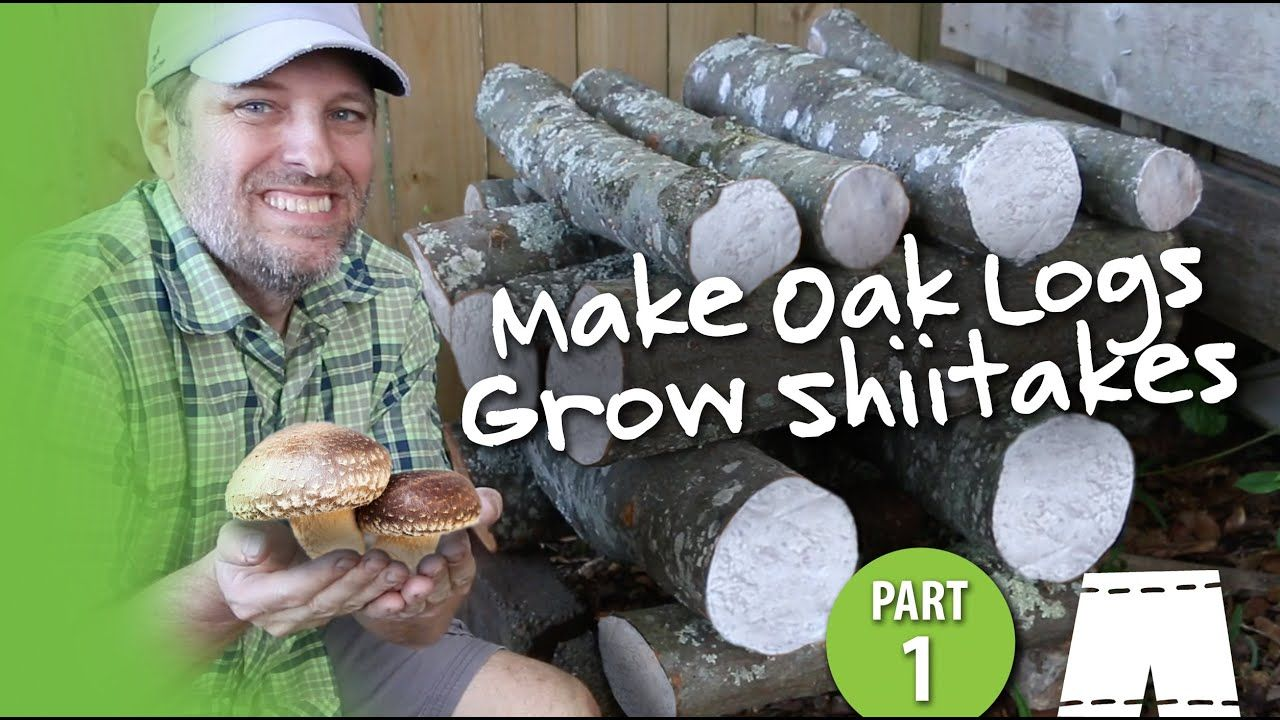 How To Grow Shiitake Mushrooms In Oak Logs Step 1