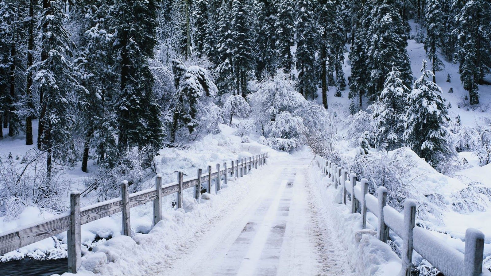 Snow Wallpapers 2 Winter Scenes Winter Forest Christmas Snow
