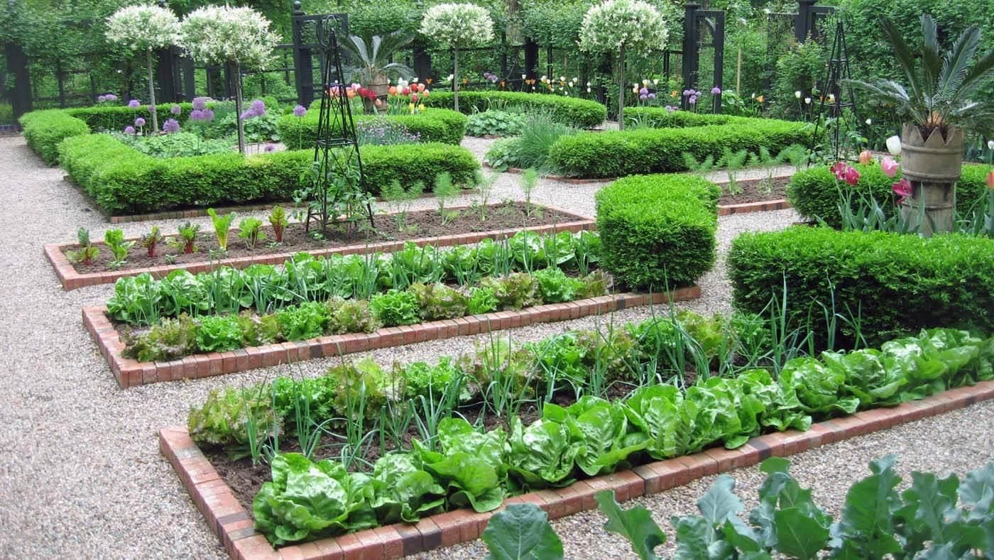 The Evolution Of Vegetable Garden Layout With 26 Photos Garden