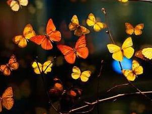 Onde foram parar minhas borboletas no estômago