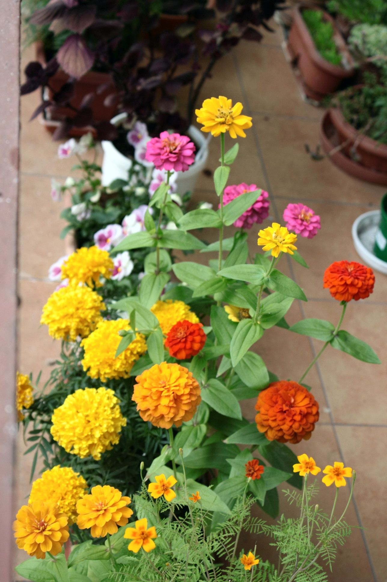 Pin By Halina Kubacka On Kompozycje Na Balkon Container Gardening Container Gardening Plants Container