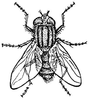 house fly coloring pages - photo #11