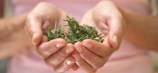 Balzam od ružmarina za njegu vaše kose! ~ Biljni lijekovi