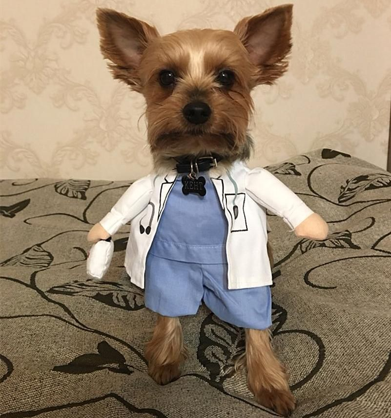 Trust Me I M A Doctor Halloween Dog Costume For 9 95 Cute