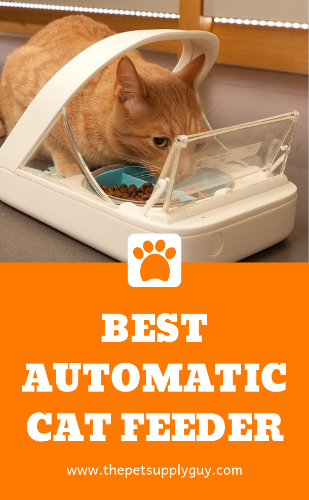 Best Automatic Cat Feeder for Multiple Cats Automatic