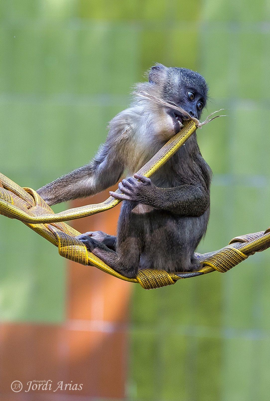 Monkey by Jordi Arias on 500px