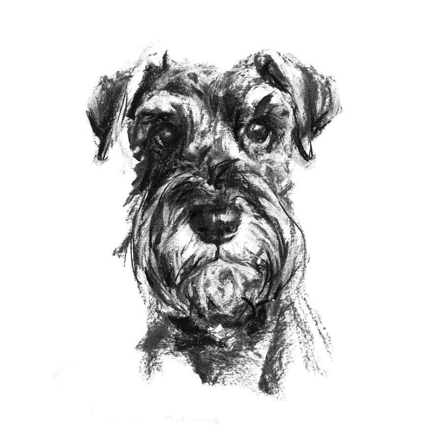 Schnauzer Drawing Easy: Animal Illustration And Art
