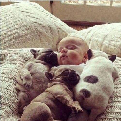 sleepin' Baby dogs & a Baby, so sweet ! <3