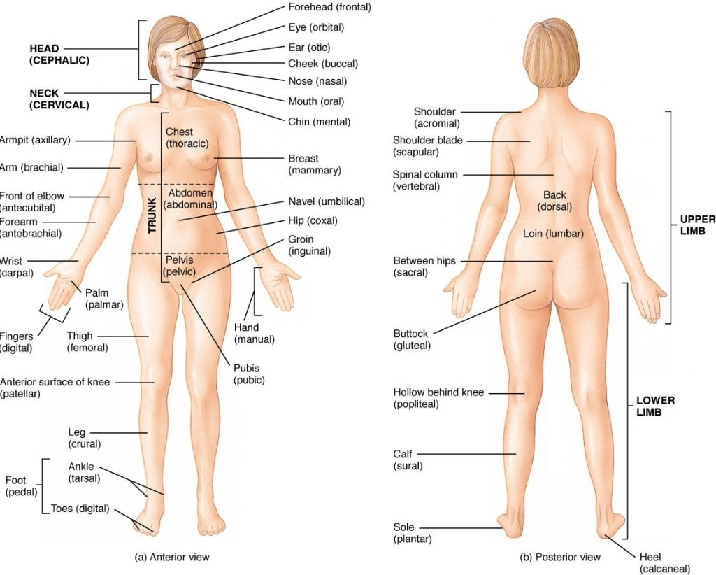 name of women body parts with picture see more about name of women rh pinterest com lower human body diagram lower body illustration [ 1024 x 822 Pixel ]
