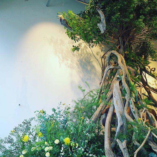 フォロワー2 507人 フォロー中273人 投稿583件 密林東京さん Mitsurintokyo のinstagramの写真と動画をチェックしよう 写真 動画 東京