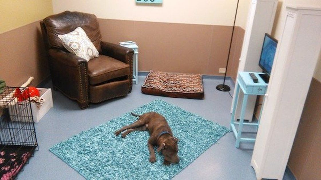 Adoption Rates Increase After Shelter Makes 'Living Room