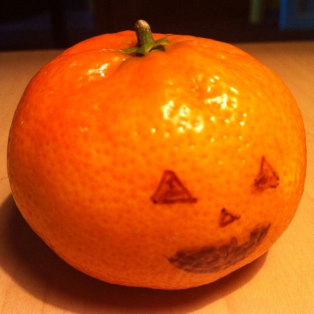 my tangerine dressed up as a pumpkin for halloween