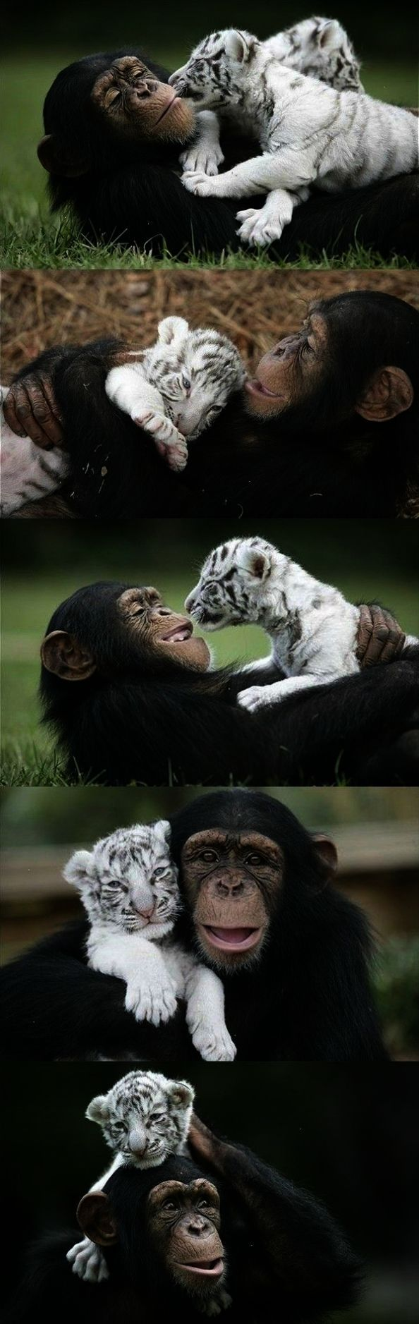 Brilliant... Pictures Of The Cutest Animals In The
