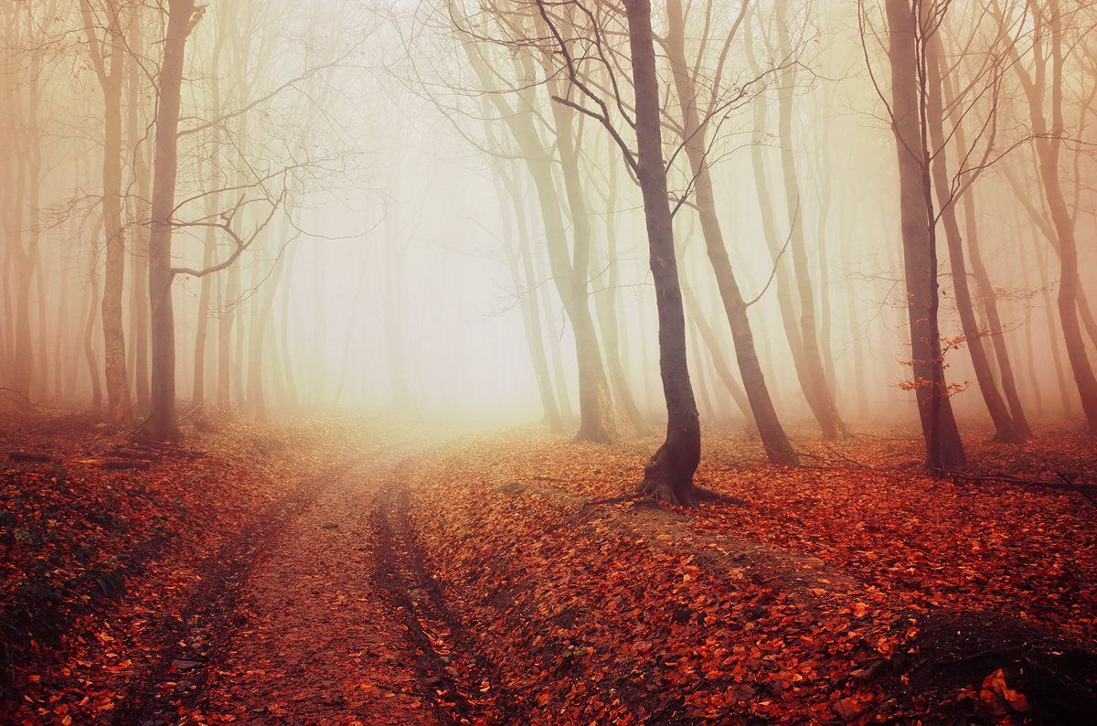 Autumn Trees in the Misty Forest Photo Art Print Poster 24x36 inch