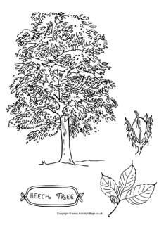 Tree Colouring Pages With Images Tree Coloring Page Tree