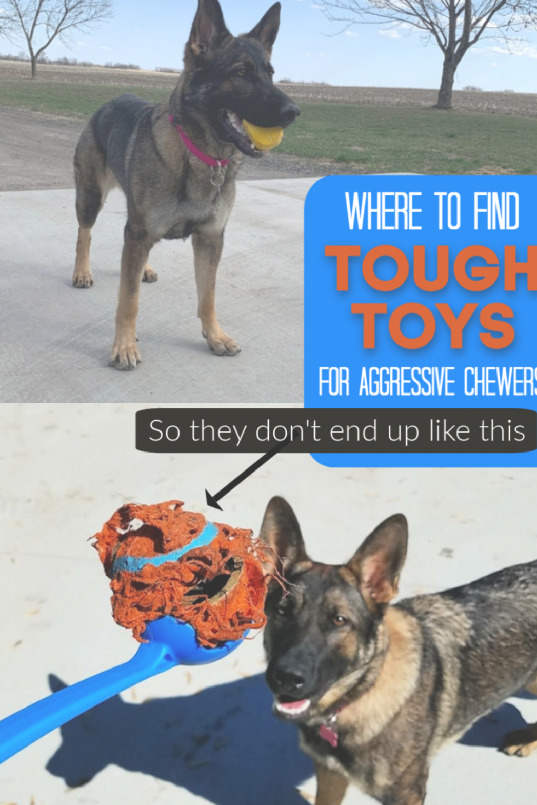 Where to find tough dog toys for aggressive chewers! Dogs