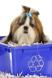 Recycled Shih Tzu Shih Tzu Shih Tzu Dog Shih Tzu Puppy