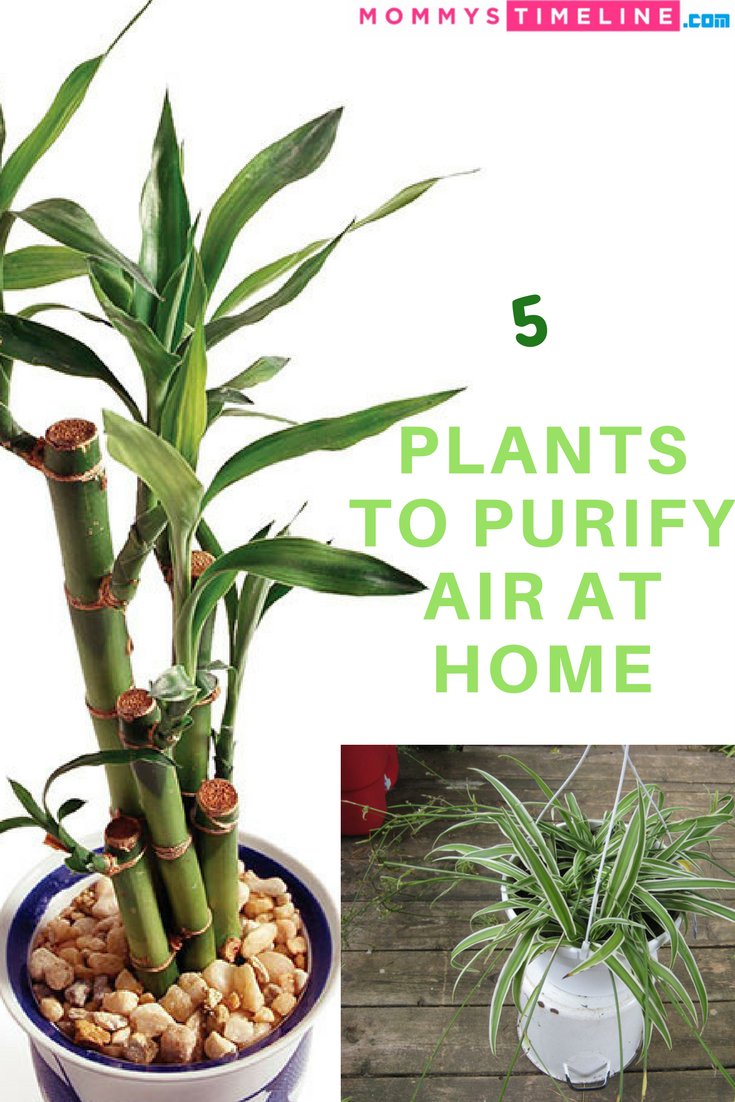 5 Air Purifying Plants You Should Have At Home
