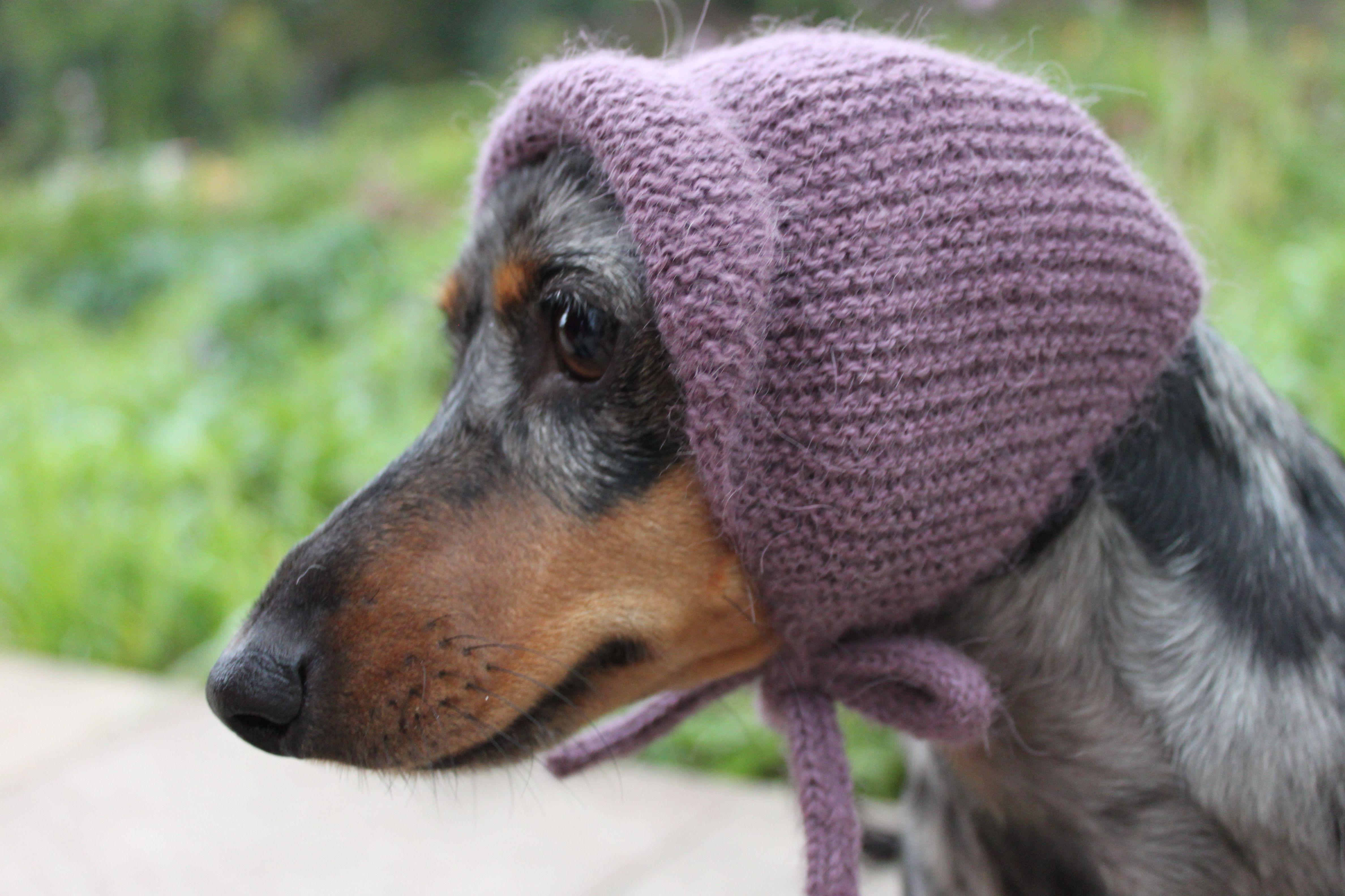 Hilarious Knitted Dachshund Hat Mini Dachshund Dog Hat