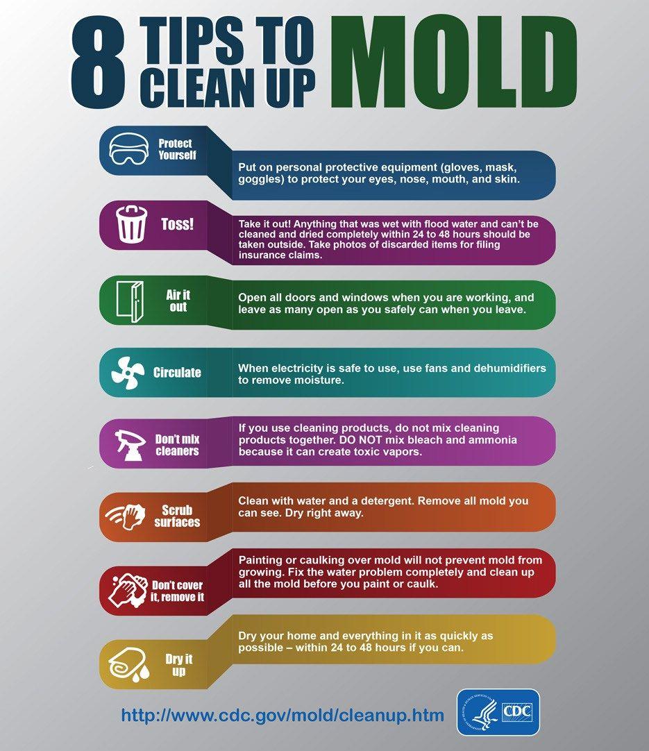 Cdc Mold Infographic