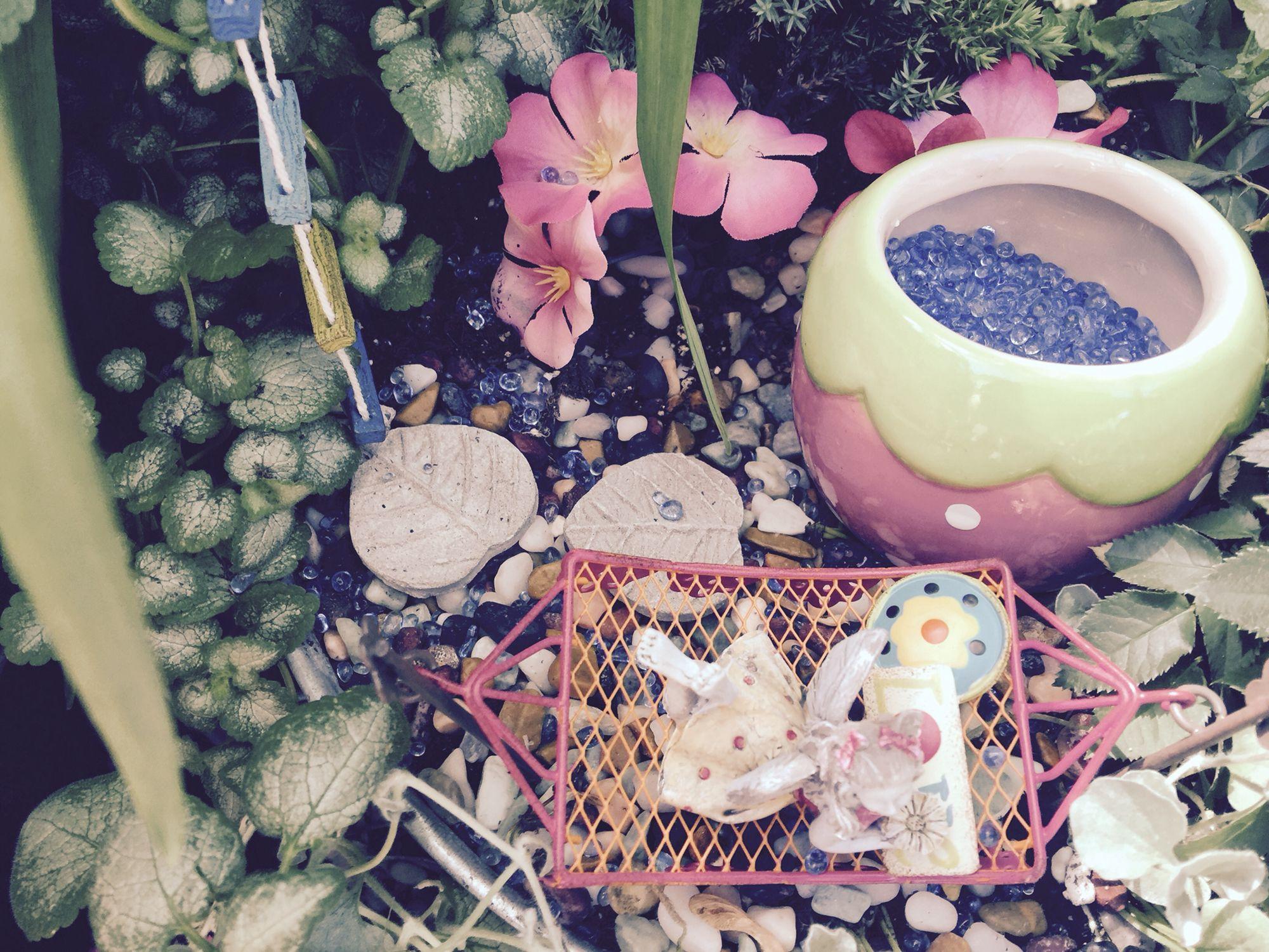 My Garden 2015