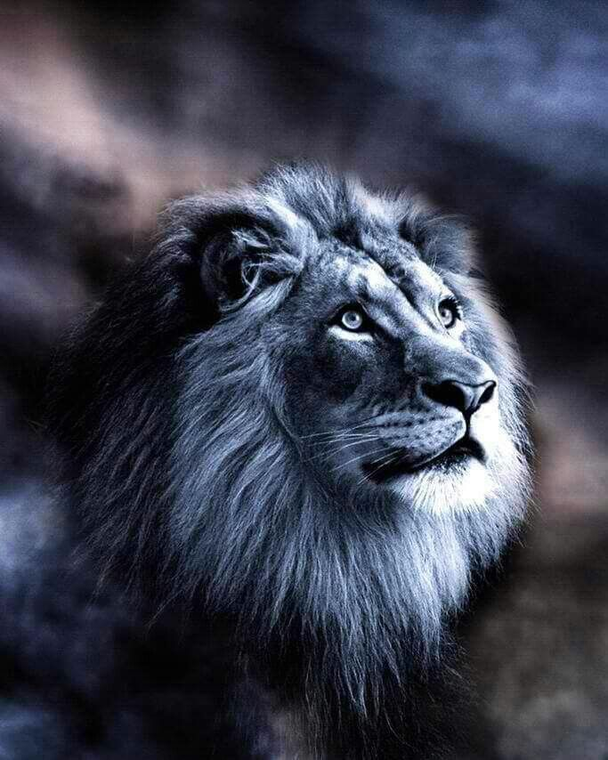 The Lion Of The Tribe Of Judah Kinda Like This