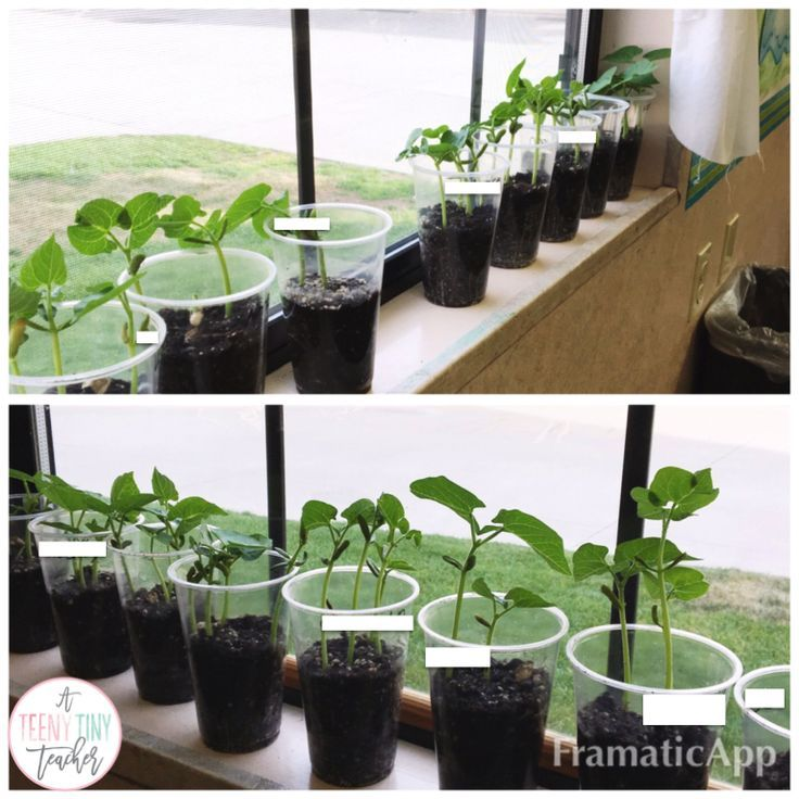 Five for Fraturday - science class: growing plants - A Teeny Tiny Teacher