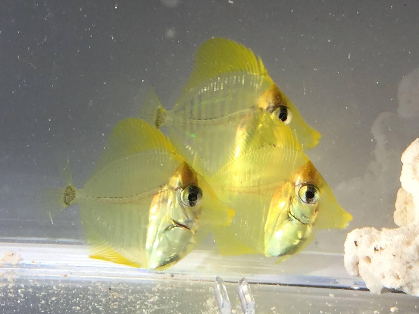 d447cde36a0a903b94d78dd13b1bf22d Frais De Aquarium Amazonien Concept