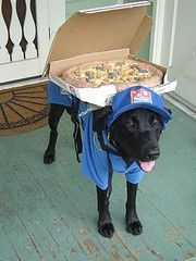 Labrador Dominos Pizza Porch Delivery Boy Pet Costumes For Dogs