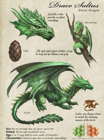 Forest dragon description #fbf