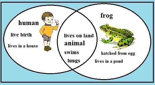 Human and frog venn diagram introduction to electrical wiring frog characteristics are you a frog compare frogs and humans rh pinterest com au compare and contrast venn diagram venn diagram of frog and human ccuart Images