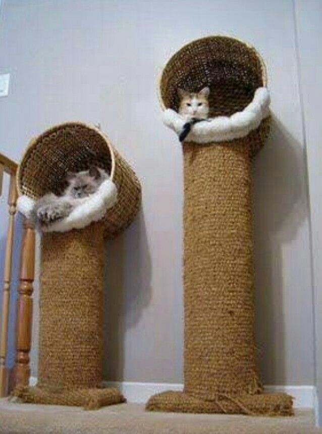 Idea Cama Gato Diy Cat Toys Cat House Diy Diy Cat Tree