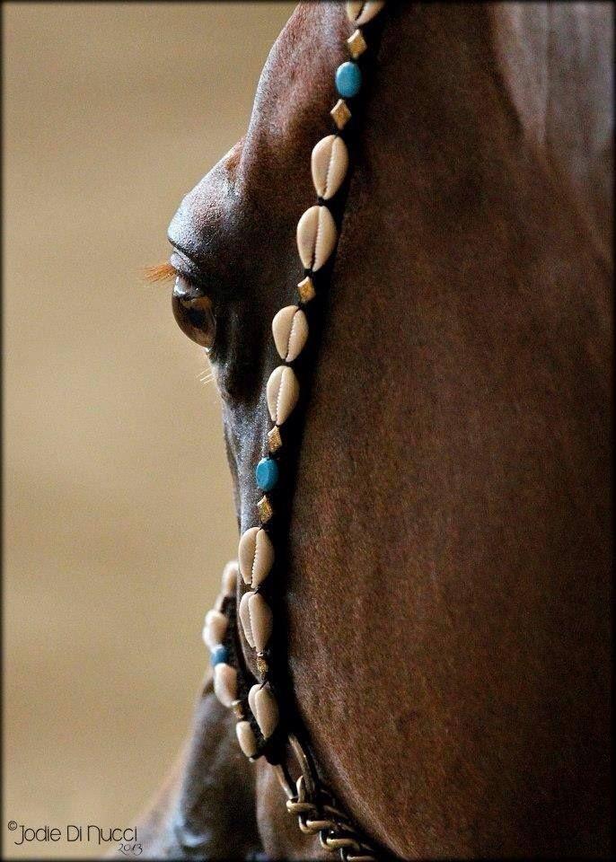 Arabian Fancy Tack
