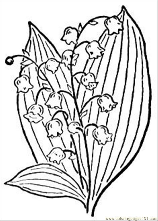 lily coloring pages | free printable coloring page Lily Of The ...