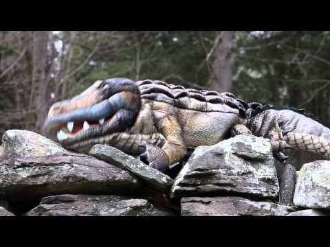 Definition of Admiration (says the Alligator!)