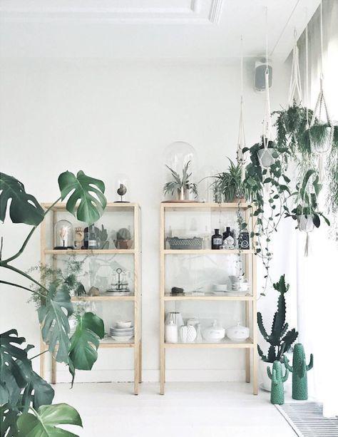 Planten, planten en planten in het interieur