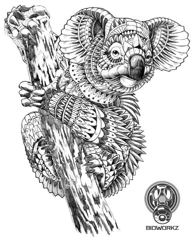 How to draw a koala/ como dibujar un koala | Adult Coloring Wildlife ...