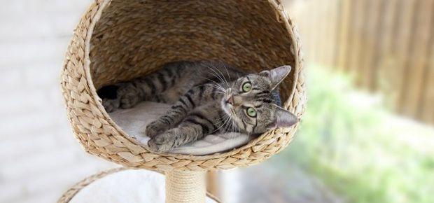 id es arbre chat astuces design chat cat. Black Bedroom Furniture Sets. Home Design Ideas