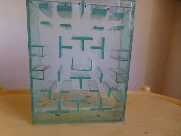 How to build a Pac Man Fish Tank. #instructables