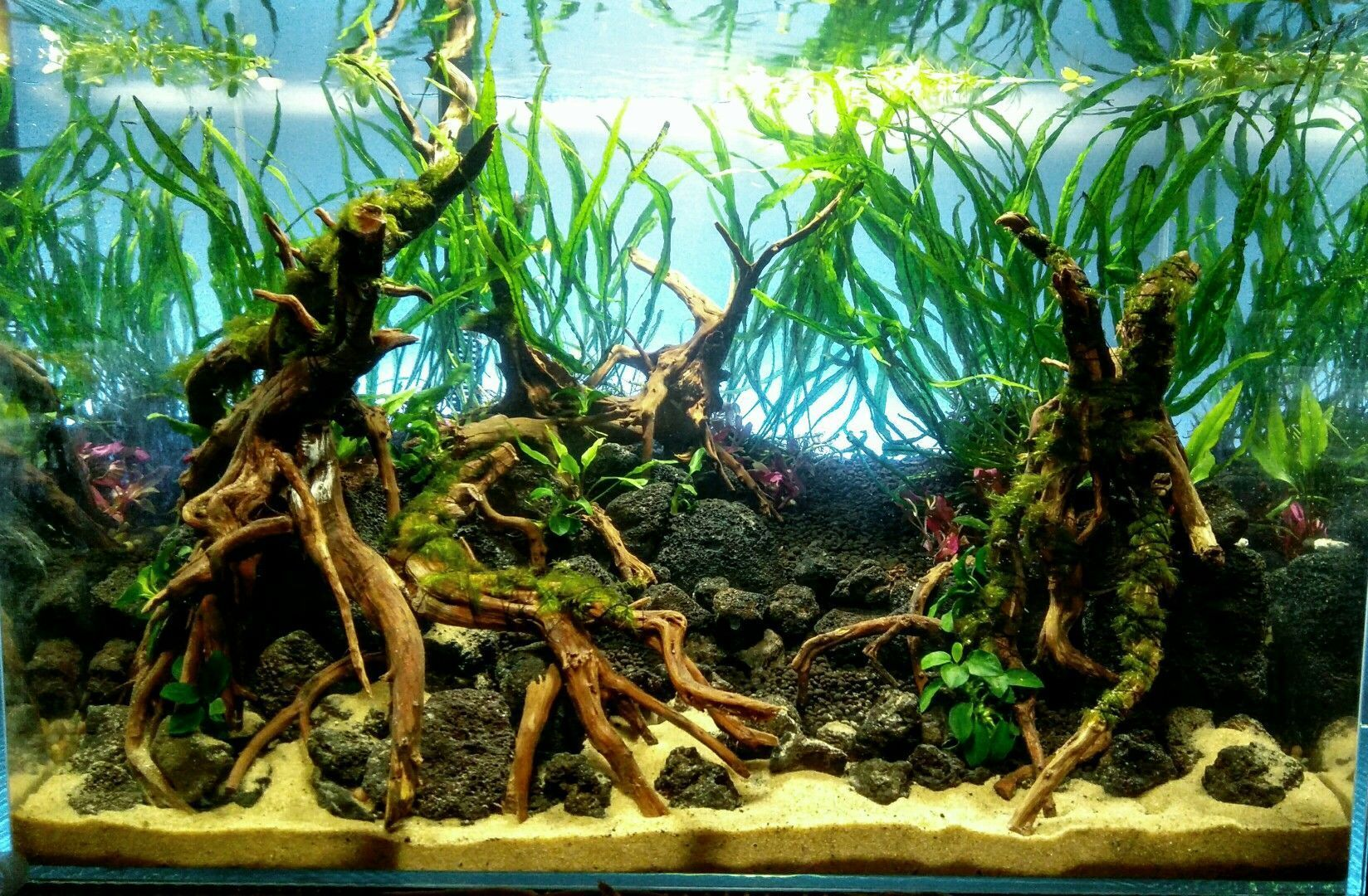 21 Best Aquascaping Design Ideas to Decor Your Aquarium - Tips ...
