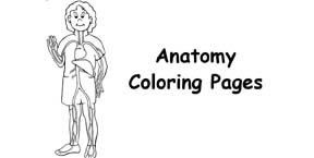 Human Body Coloring Pages Index Exploring Nature Educational Resource