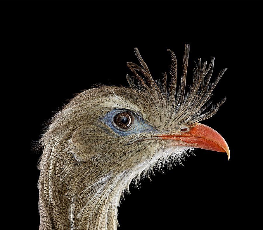 Incredible Studio Portraits Of Wild Animals By Brad Wilson: Awe-inspiring Animal Portraits By Talented New York-based