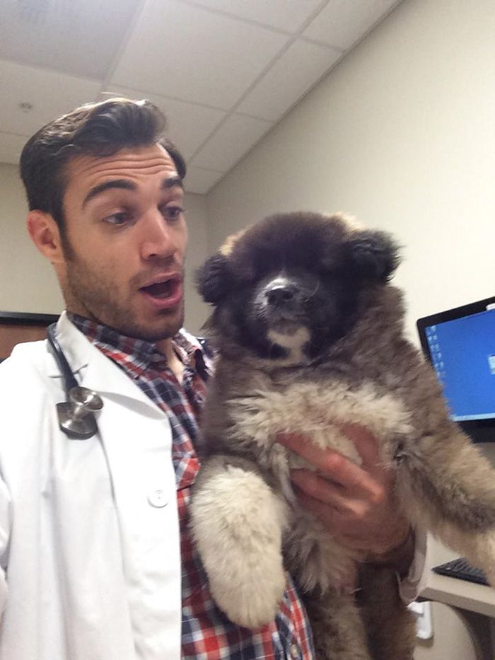 The Hottest Animal Doctor Ever That Ll Make You Want To Get Your Pet Checked Animal Doctor Animals Dr Evans